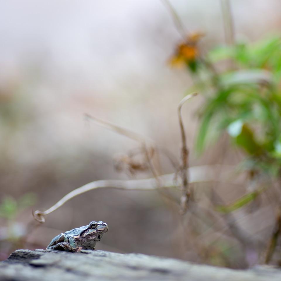 マクロレンズ、小さな生き物の世界を覗くこともできます。
