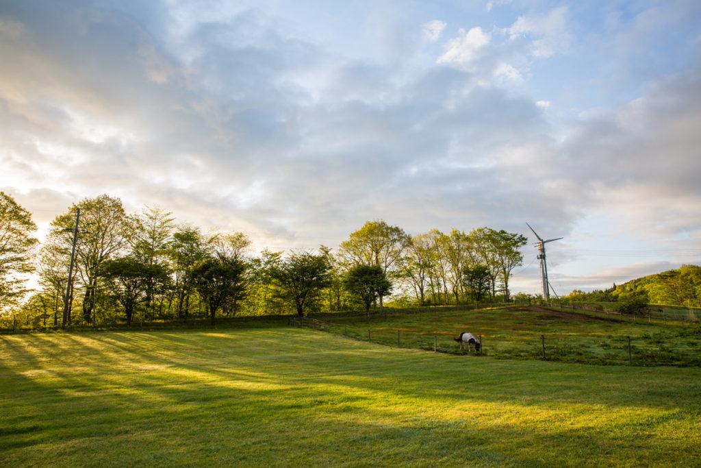 南蔵王「グリーンパーク不忘」新緑が朝日を受けて輝いていました。
