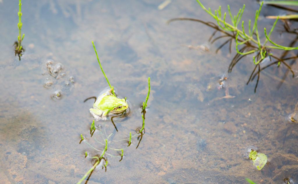 南蔵王「グリーンパーク不忘」緑豊かな大自然の中で、フィッシングやバーベキュー、キャンプ、自然散策、動物とのふれあいが楽しめるパークです!